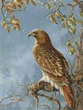 Retail Hawk