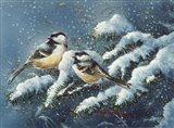December Chickadees