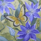 Large Butterfly and Clematis