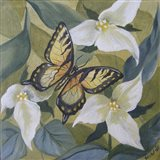 Large Butterfly and Trillium