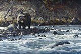 Along The Yellowstone - Grizzly