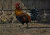Barnyard Strut - Bantam Rooster