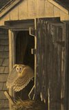 Out of the Darkness - Barn Owl