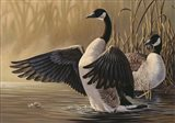 1994 Canada Geese - your walls, your style!