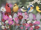 Song Birds and Cosmos