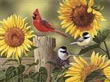 Sunflowers and Songbirds