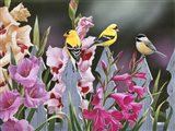 Feathered Friends and Gladiolus