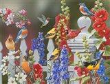 Birds - Spring & Summer