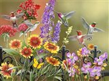 Hummingbirds - Fall