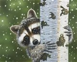 Peek-A-Boo Raccoon