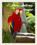 Parrot II with Words