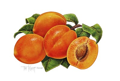 Peaches Poster by Tim Knepp for $38.75 CAD