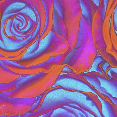 Pink Orange Blue Roses Poster by Toula Mavridou-Messer for $80.00 CAD