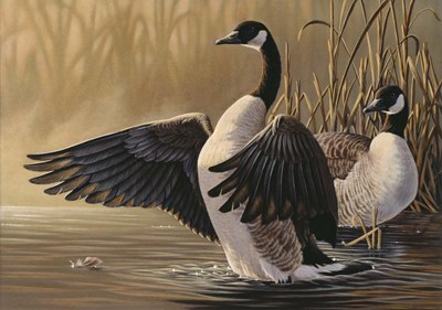 1994 Canada Geese Poster by Wilhelm J. Goebel for $65.00 CAD