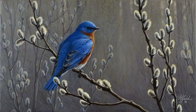 Signals Of Spring - Eastern Bluebird Poster by Wilhelm J. Goebel for $56.25 CAD