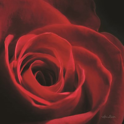 The Red Rose I Poster by Lori Deiter for $35.00 CAD