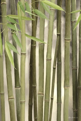 Backlit Bamboo II Poster by Lori Deiter for $43.75 CAD