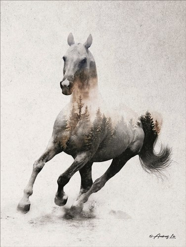 Galloping Stallion Poster by Andreas Lie for $41.25 CAD