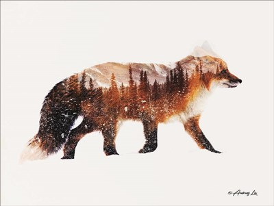 Arctic Red Fox Poster by Andreas Lie for $41.25 CAD