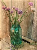 Country Chives