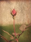 Colorblock Rose II