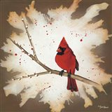 Weathered Friends - Cardinal
