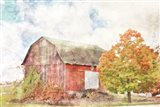 Autumn Maple by the Barn