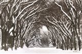 Snow Tree Tunnel