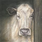 Farm Animal - Cow