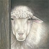 Farm Animal - Sheep