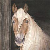 Farm Animal - Horse