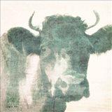 Around the Farm - Bull
