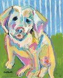 A Labrador Puppy Smile