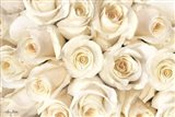 Top View - White Roses