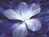 Blue Succulent II