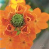 Floral Pop IV