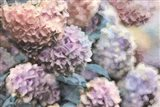 Hydrangeas Abstract