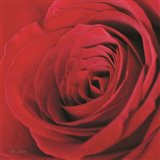 The Red Rose III