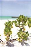 Sand Succulents I