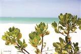 Sand Succulents II