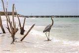 Shore Crane III