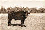 Bull in Sepia