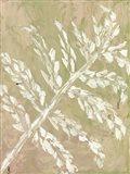 Fern No. 2