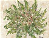 Succulent No. 3
