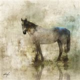 Horse Reflection II