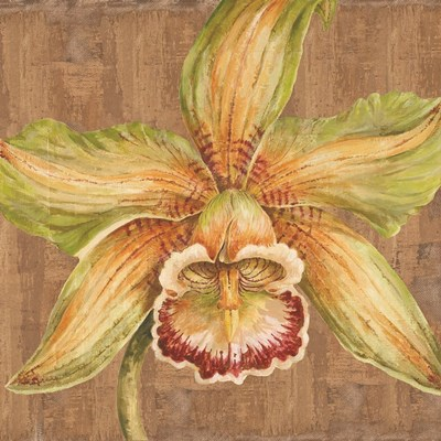 Aloha Beauty I Poster by Judy Shelby for $56.25 CAD
