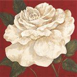Rosa Blanca Grande II