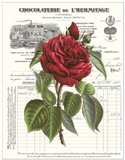 Heirloom Roses A