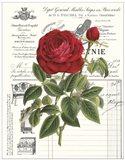 Heirloom Roses B