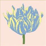 Soho Tulip I